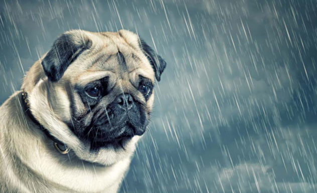 Of Dog Poo and Depression
